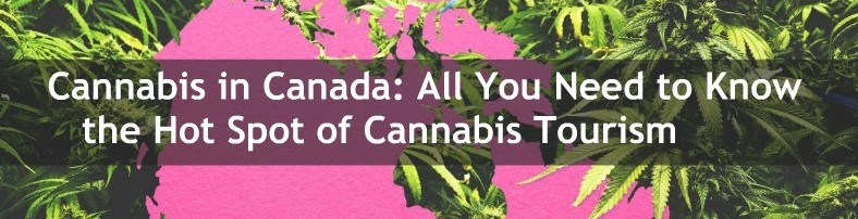 cannabies canada all you need to know 1