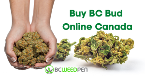 Buy BC Bud Online Canada