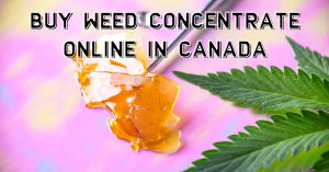 Buy Weed Concentrate Online in Canada