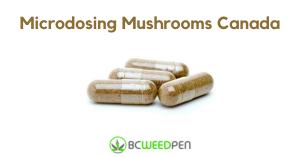 Microdosing Mushrooms Canada