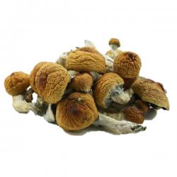 Buy Shrooms Online In Canada
